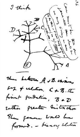 darwin ve evrim agaci