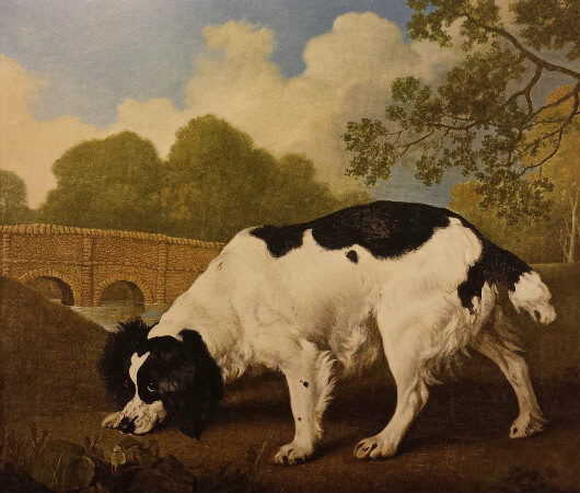 George Stubbs British, Faddle, A Black And White Spaniel Belonging To Sir John Nelthorpe, 1792
