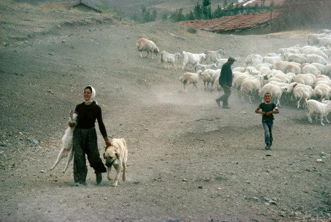 Richard Kalvar, Ankara, 1979