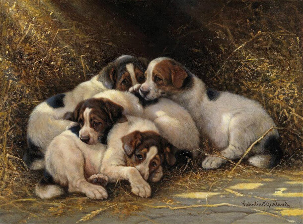 Thomas Garland, Four Puppies In A Haystack