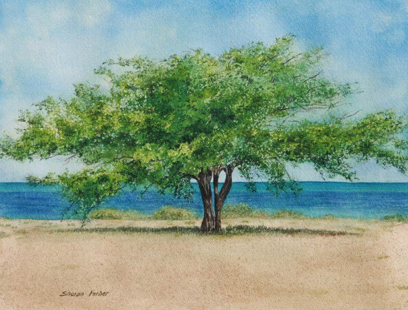 Sharon Farber, Acacia Tree