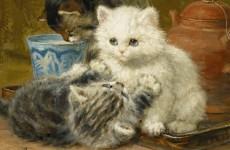 kedili oykuler