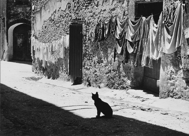 Toni Schneiders, Provence, France, 1954