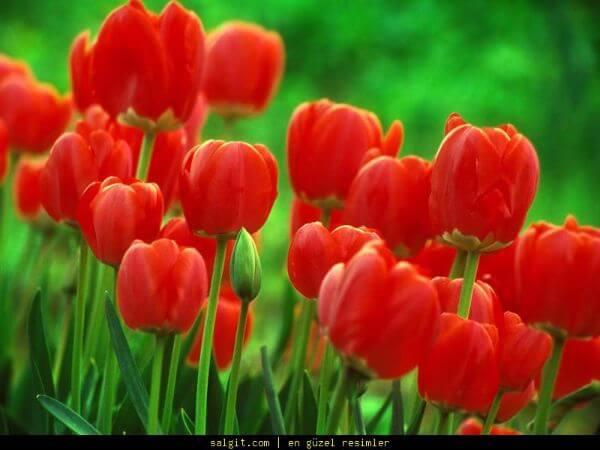 çiçek çeşitleri Isimleri Ve özellikleri