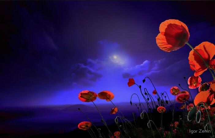 igor Zenin, Poppies Blue