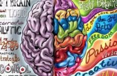 insan beyni hakkinda