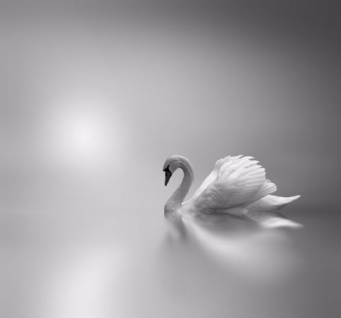 Josep Sumalla, Between The Light