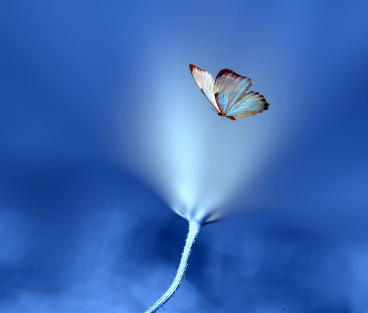 Josep Sumalla, Mystical Flight