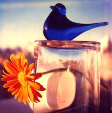 Andre Kertesz, Bird 3, 1981