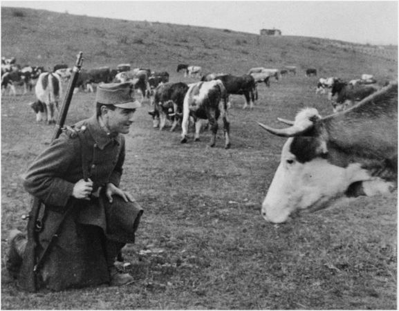 Andre Kertesz, Soldier and Cow, 1917