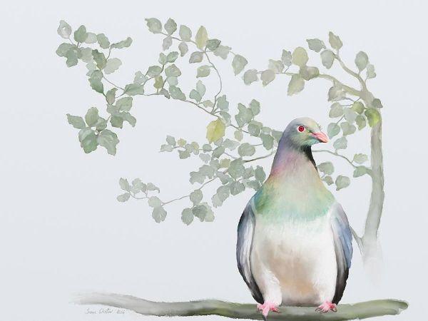 Ivana Westin, Wood Pigeon
