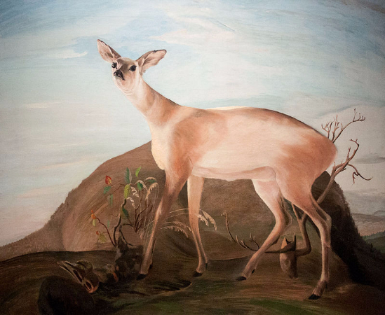 Tivadar Csontvary Kosztka, Deer, 1893