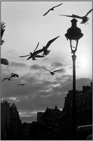 Raymond Depardon, Fransa, 2003