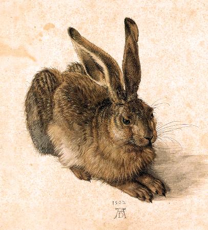 Albrecht Durer, Young Hare, 1502