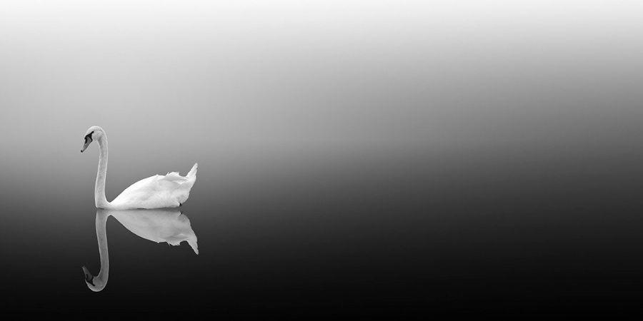 Vassilis Tangoulis, Swan Lake