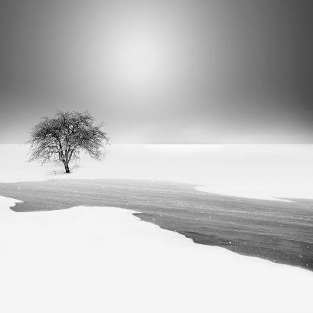 Vassilis Tangoulis,Lonely Tree