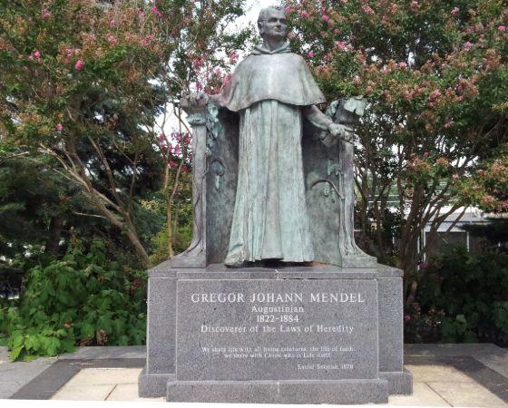 Philadelphia'daki Villanova Üniversitesi kampüsünde, Mendel Bilim Merkezinin hemen girişinde görülen Mendel heykeli, James Peniston'un eseridir