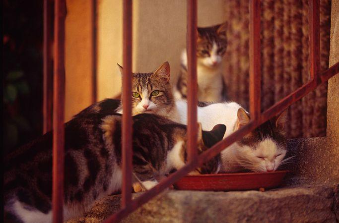 Merdivenlerdeki Kediler