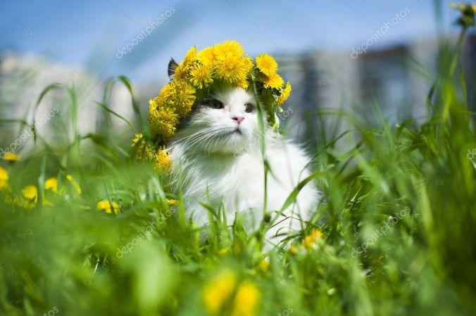 Sarı Çiçek Tacıyla Kedi