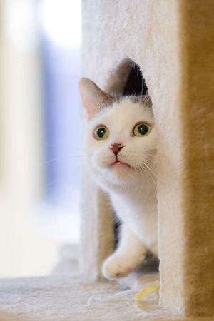 Yuvasında Beyaz Kedi