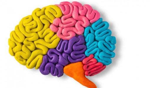 Beyin İllüstrasyon